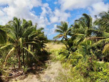 56-664 Kamehameha Hwy #2, Kahuku, HI
